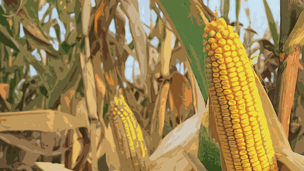 Is the New York Times Finally 'Learning To Love GMOs'?